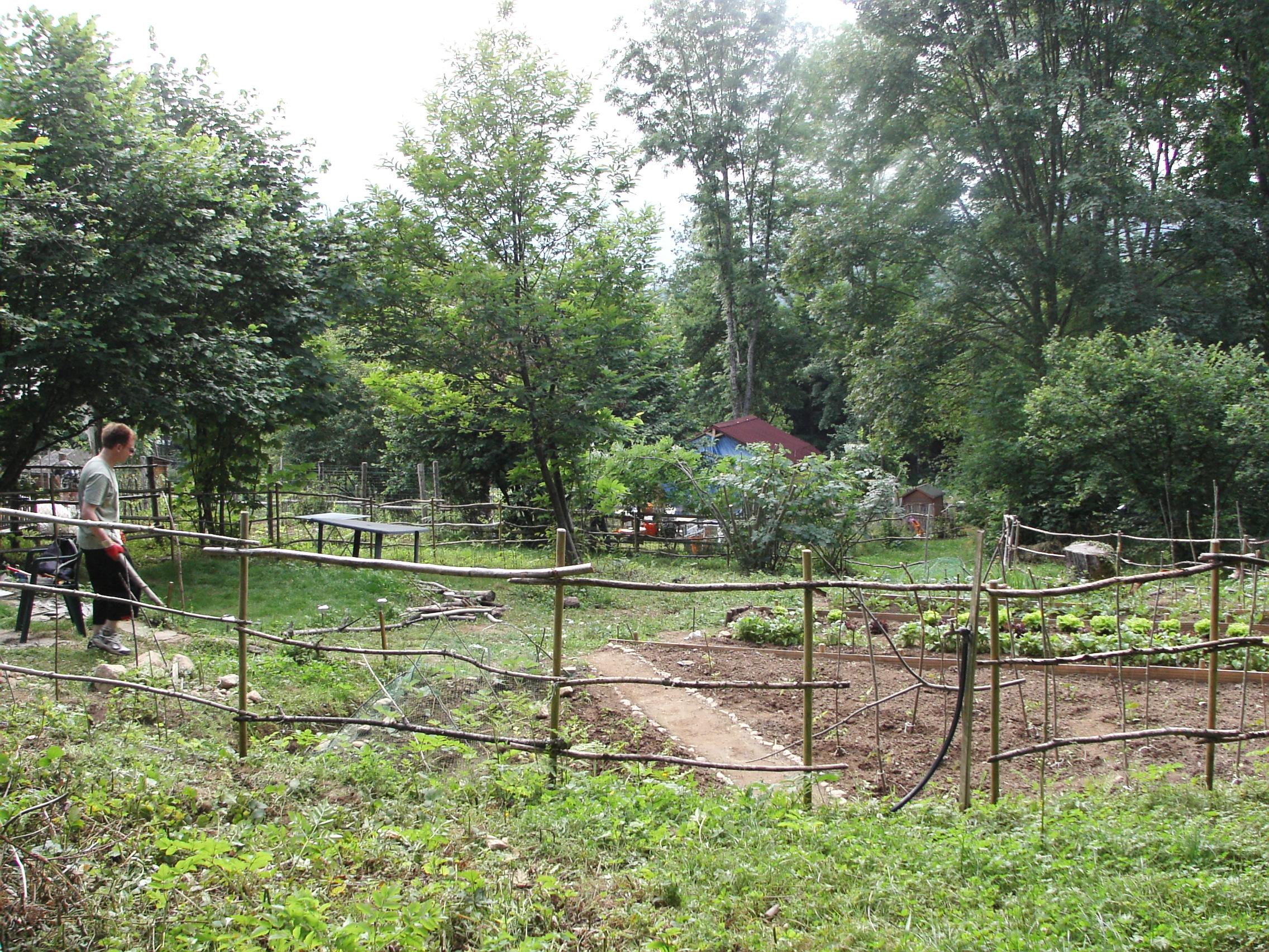 Le dracojardin cr ation et am nagement du jardin for Amenagement jardin foret